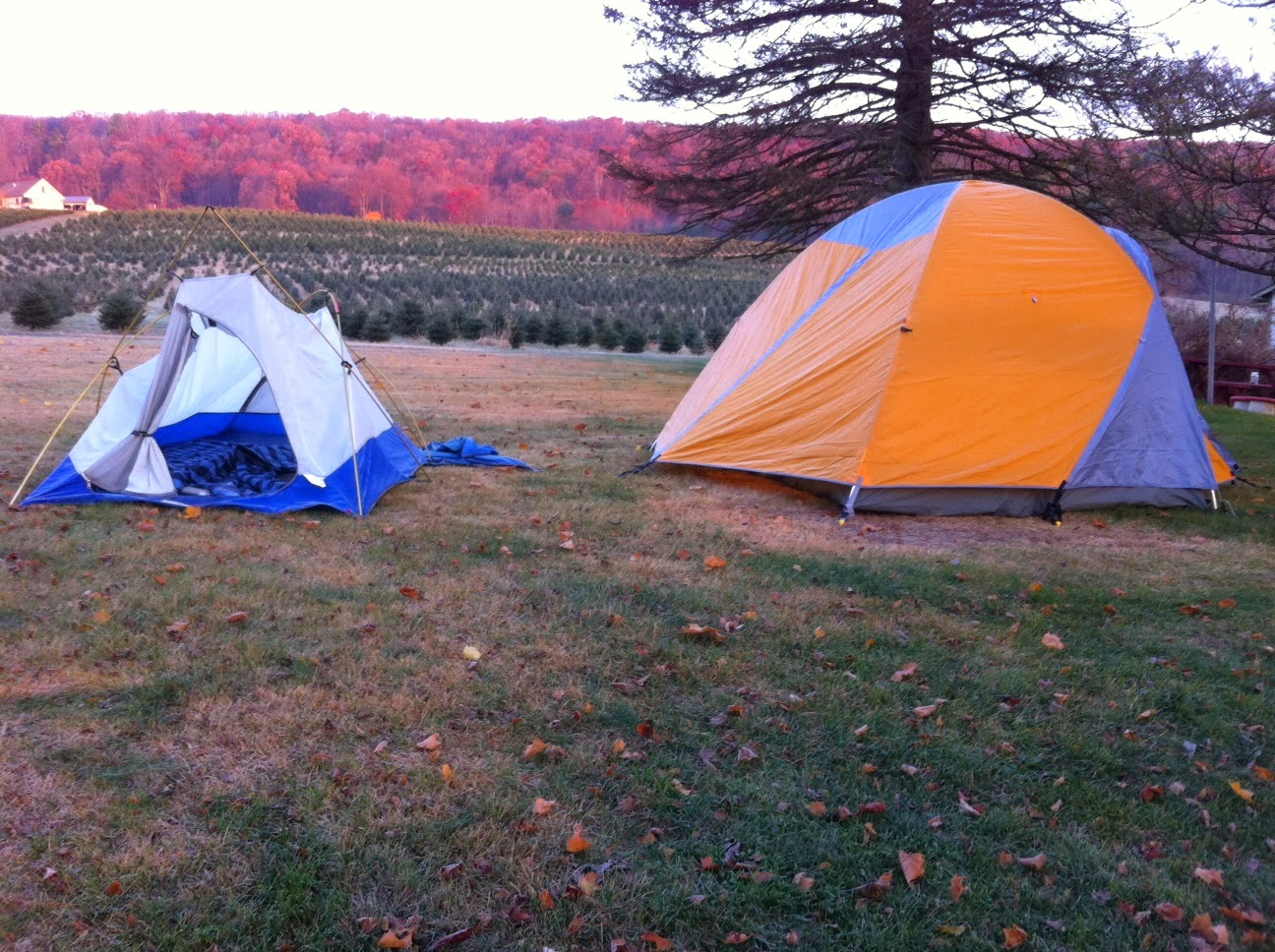 Vector on the Right & The Kid in the Tent: November 2013