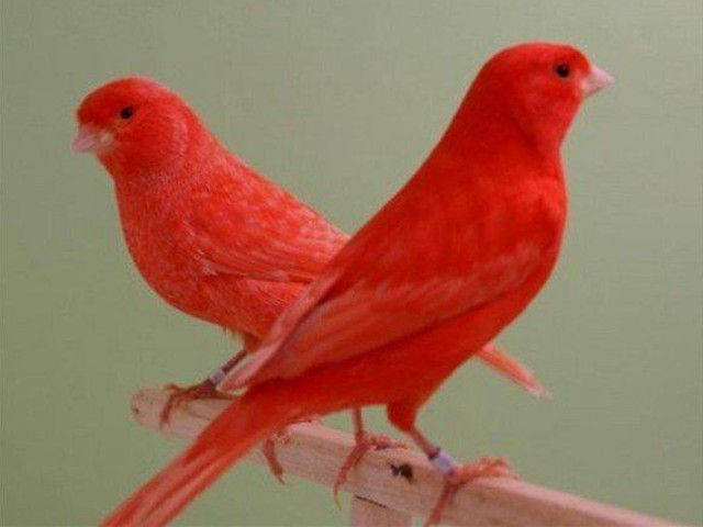 Pets and hobbies reptiles birds dogs cats pets foods pets care