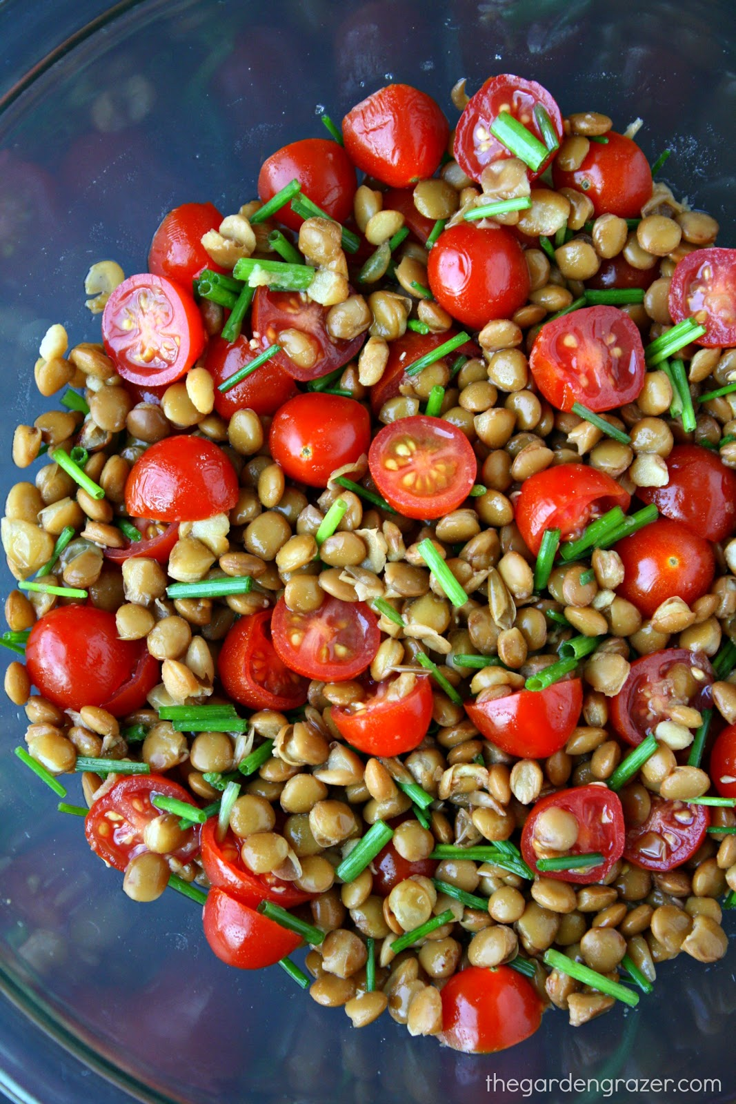 Lentil and tomato salad recommendations
