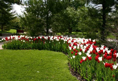 Arte y jardiner a las plantas bulbosas y tuberosas - Fotos de flores de jardin ...