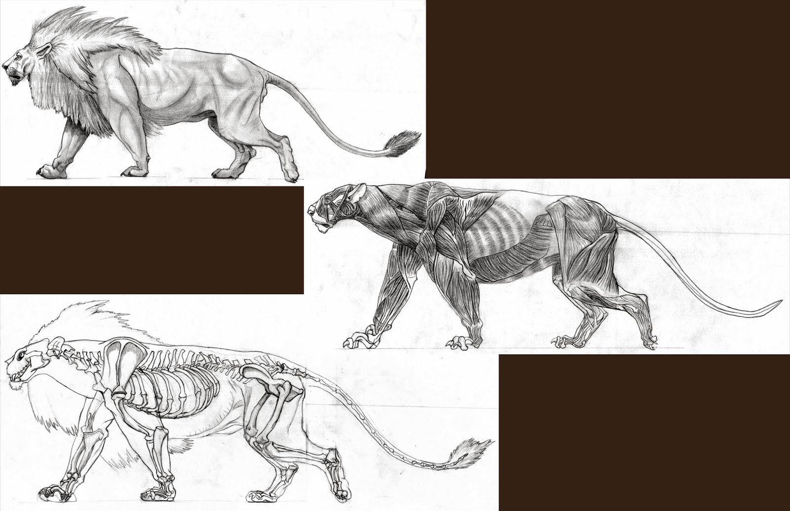 Creation Lion Anatomy Breakdown
