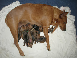 Dash and 7 puppies doing fine on second day