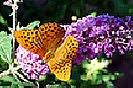 13 Fotografías de flores que atraen a las maroposas