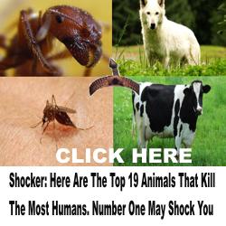 animal human killers
