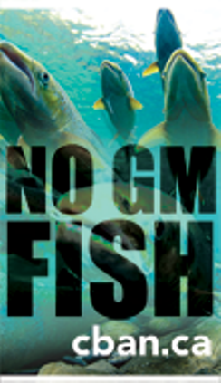 Stop Genetically Modified Fish