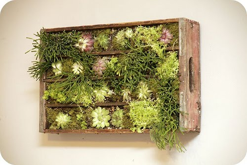 jardim vertical ideias:Crate Vertical Garden Wall
