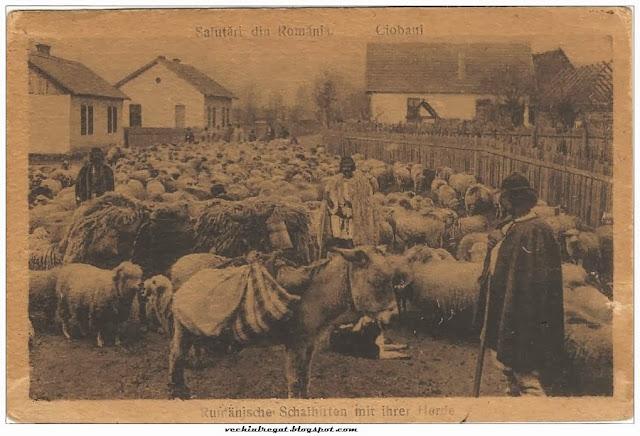 Ciobani pe ulita