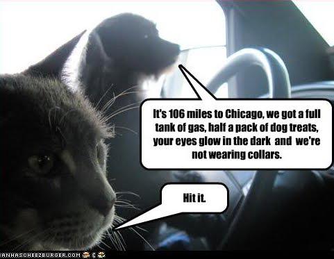 lol+cats+road+trip.jpg (481×373)