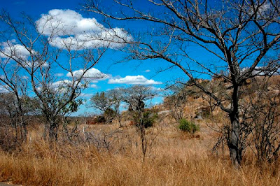 Kruger-National-Park-Habitat