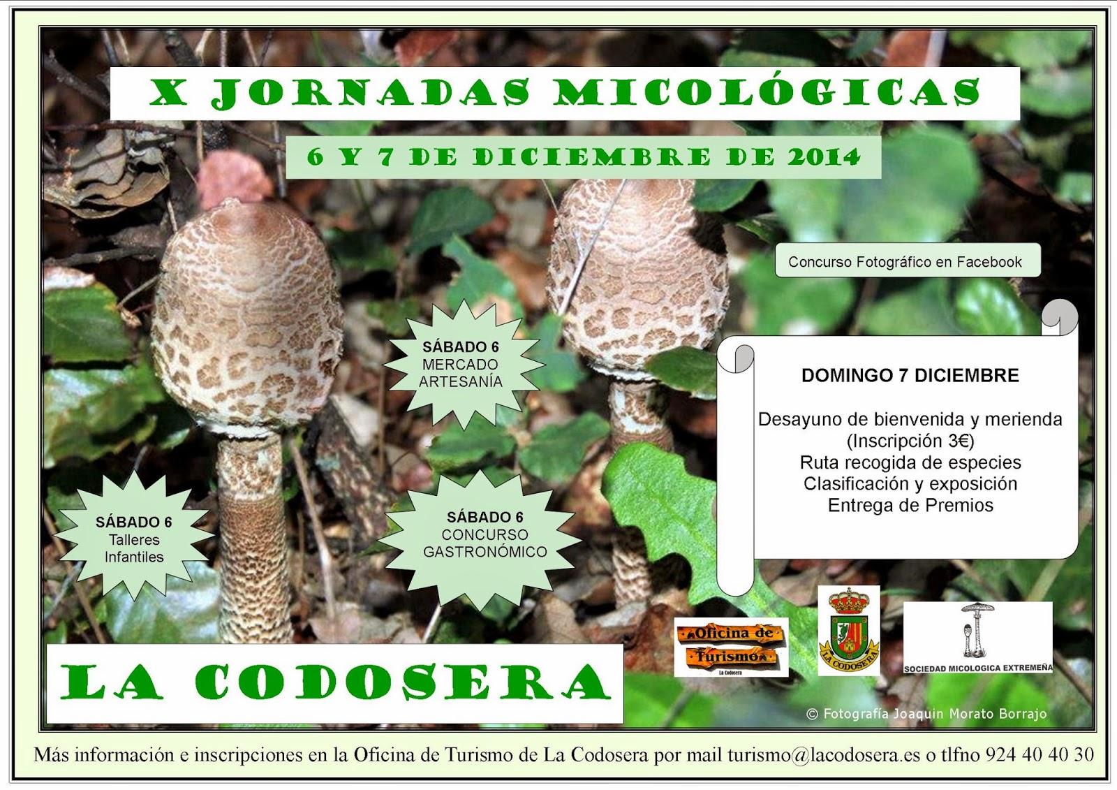 micología-setas-jornadas