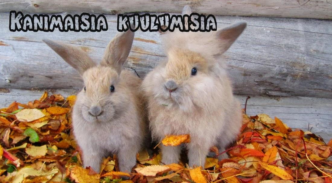http://kanimaisia.blogspot.fi/