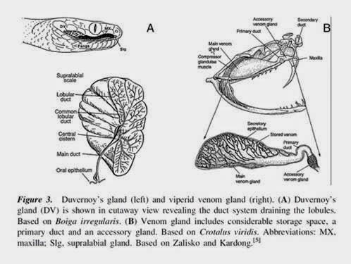 VETBLOGGERS - Ciencias veterinarias y biológicas : Aspectos básicos ...