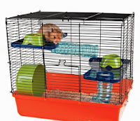 Tudo sobre hamsters