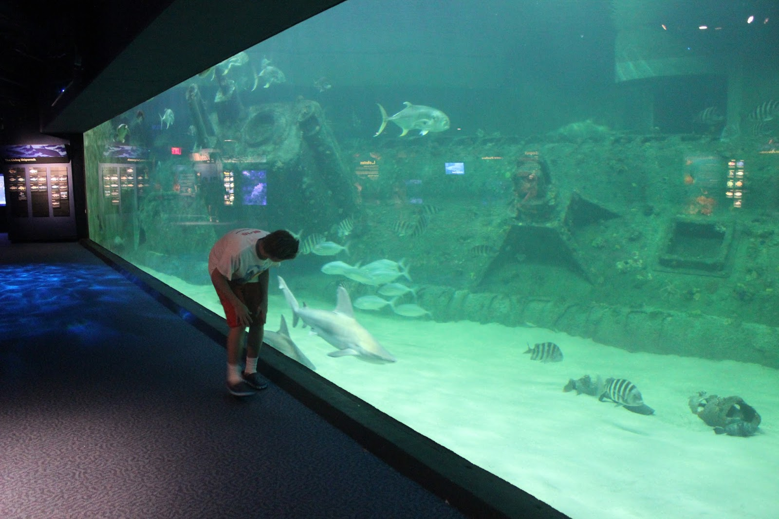 The Largest Aquarium In North Carolina Pine Knoll Shores
