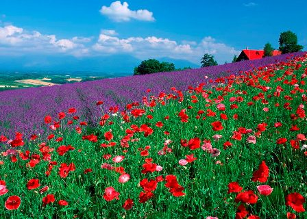 Free Download The Nice Colourful Flowers WallpaperFree Flower Desktop Wallpapers Scenery PhotosFlowers ImagesWorld Most Beautiful