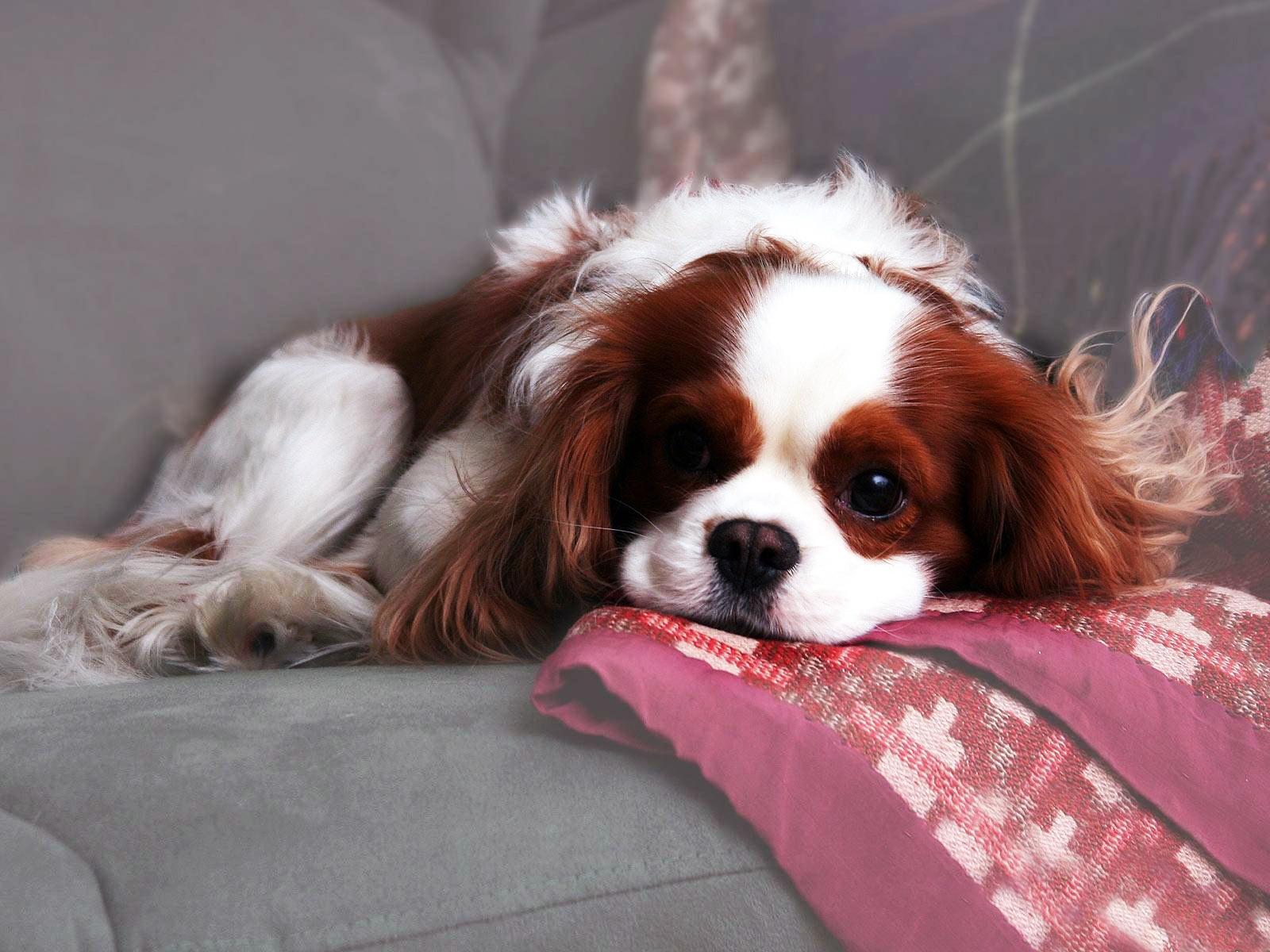 http://4.bp.blogspot.com/-MoA5zY3rmiw/T18P5ueoHLI/AAAAAAAAZxg/4OP3ihl2IgI/s1600/Dogs+(52).jpg