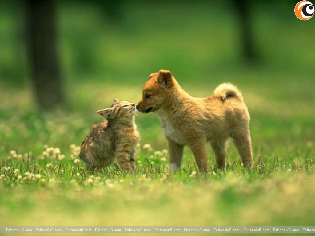 Lovely Pet Wallpaper, Lovely Pets Pictures & Animal Wallpapers: Lovely