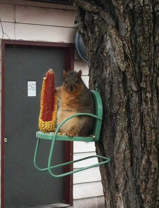 Funny animals of the week - 31 July 2015, animal photos, funny pictures of animals