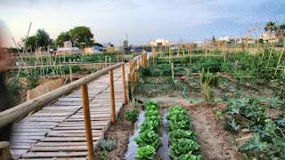 huertos ecologicos