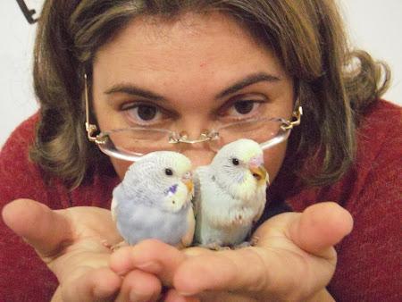 pássaros são feitos para...voar