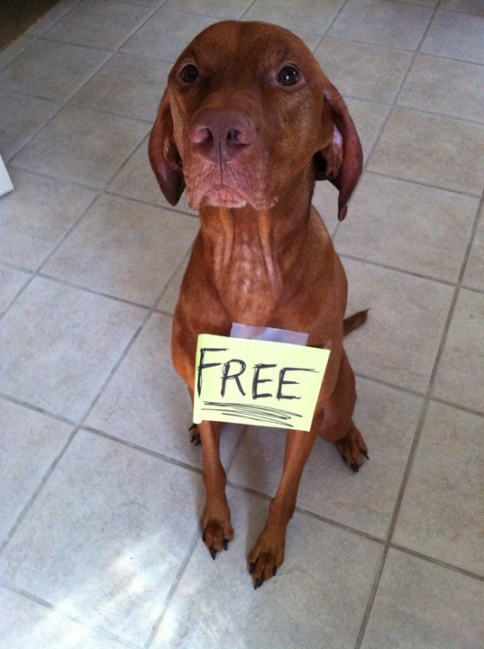 Dog Shaming Collection ~ Funny Joke Pictures