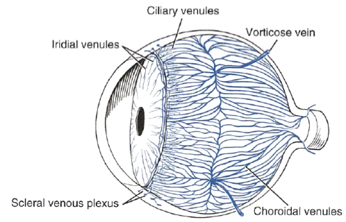 Eye opener anatomy blood supply to the eye source evans he and lahunta a 2012 millers anatomy of the dog 4th edn missouri saunders elsevier ccuart Choice Image
