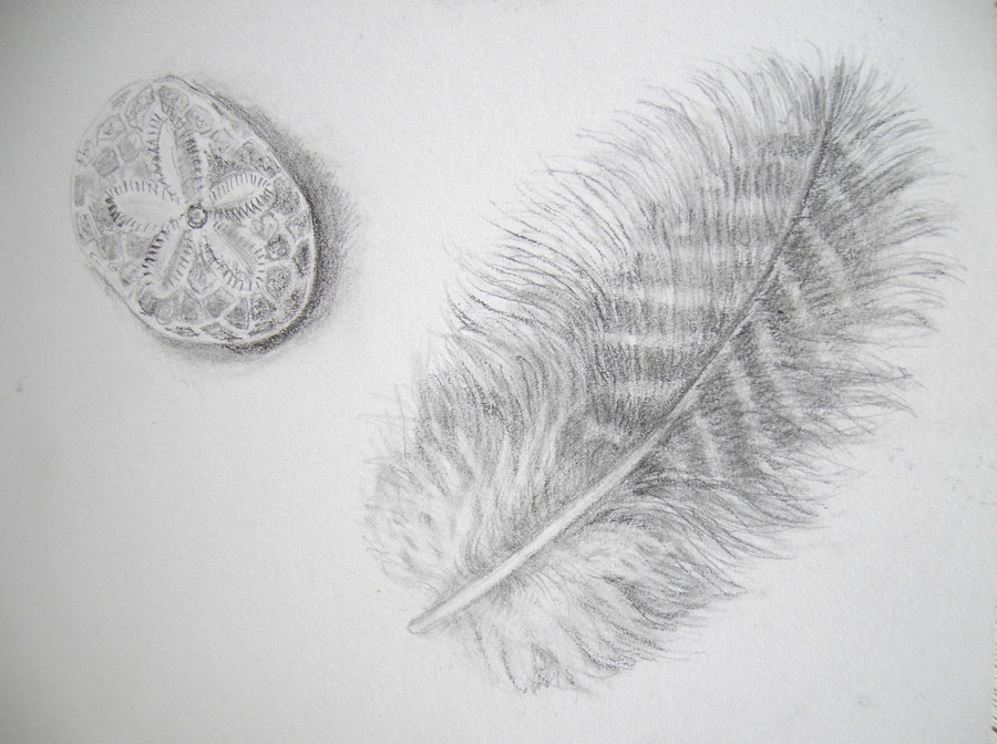 Line Drawing Feather : Botanical sketches and other stories expressive lines