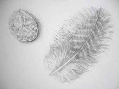 Feather and sand dollar graphite drawing by Shevaun Doherty