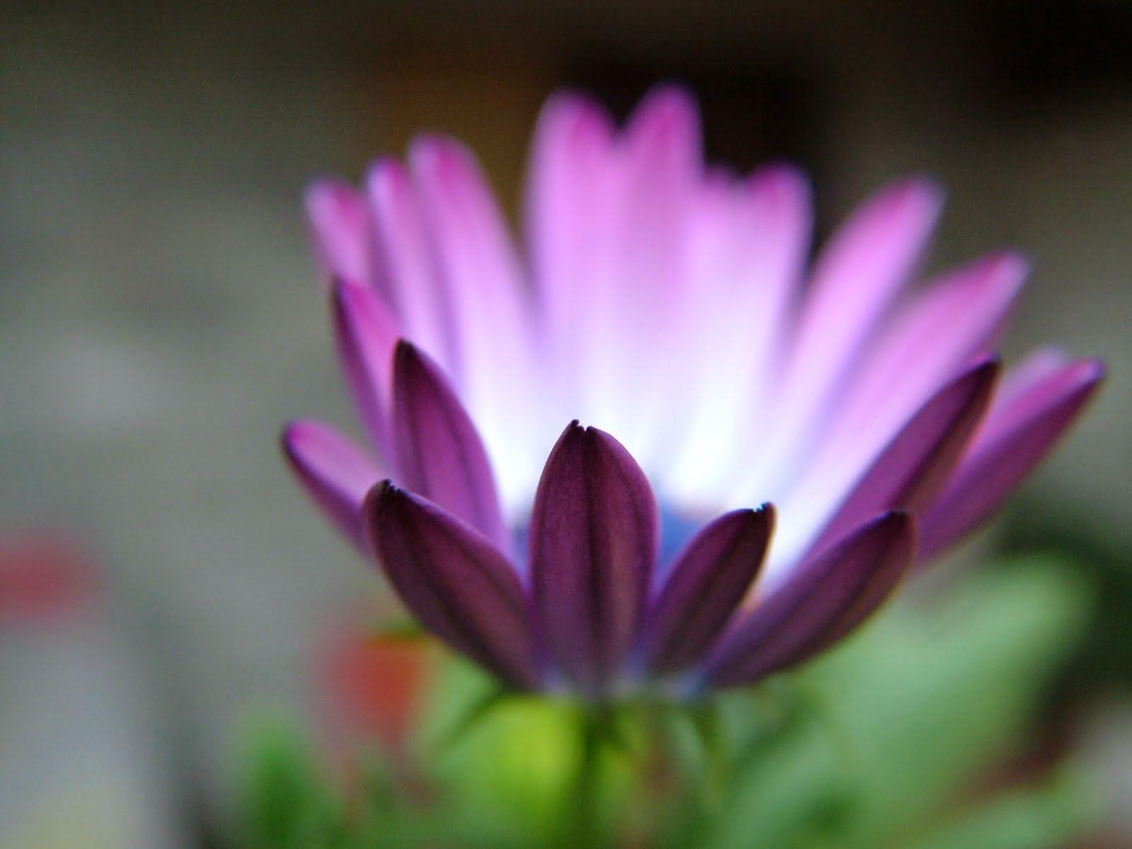Kvet.