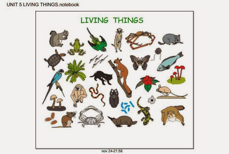 Living and Nonliving Things Video - Bing