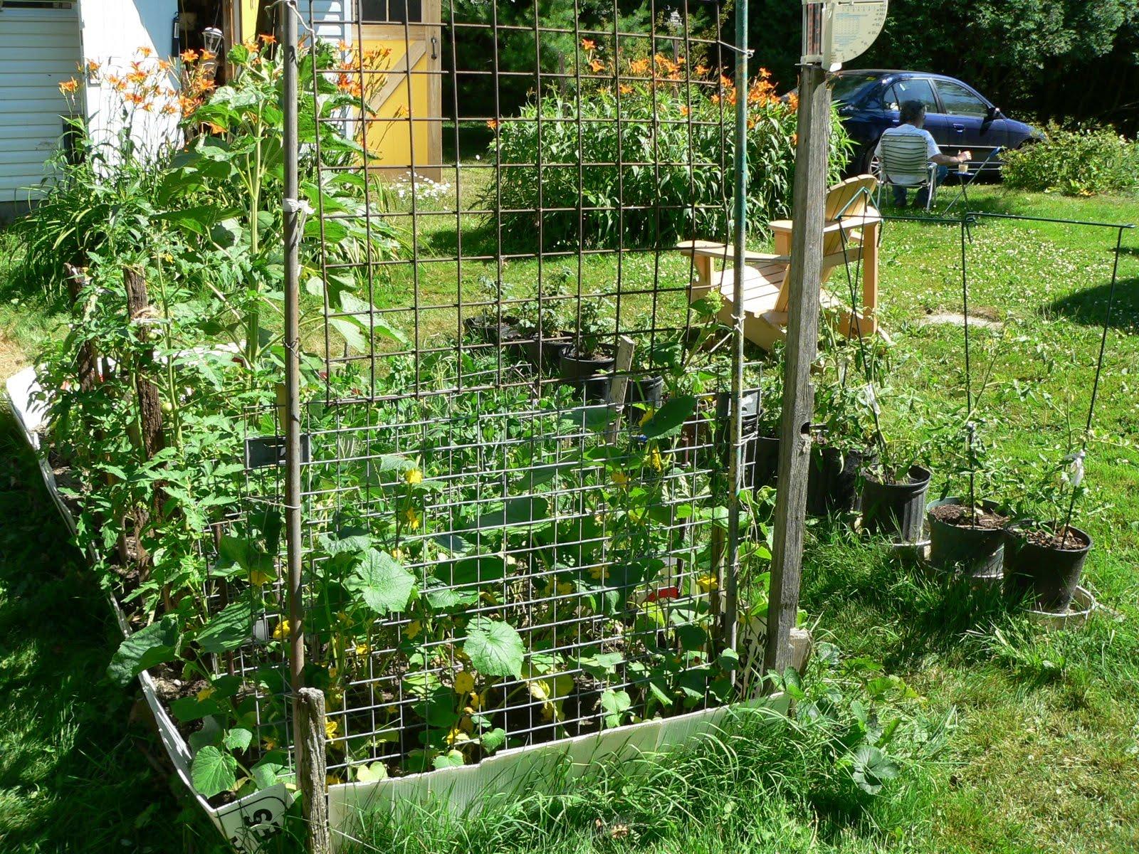 Les ami e s du richelieu des l gumes du jardin version - Comment conserver des carottes du jardin ...