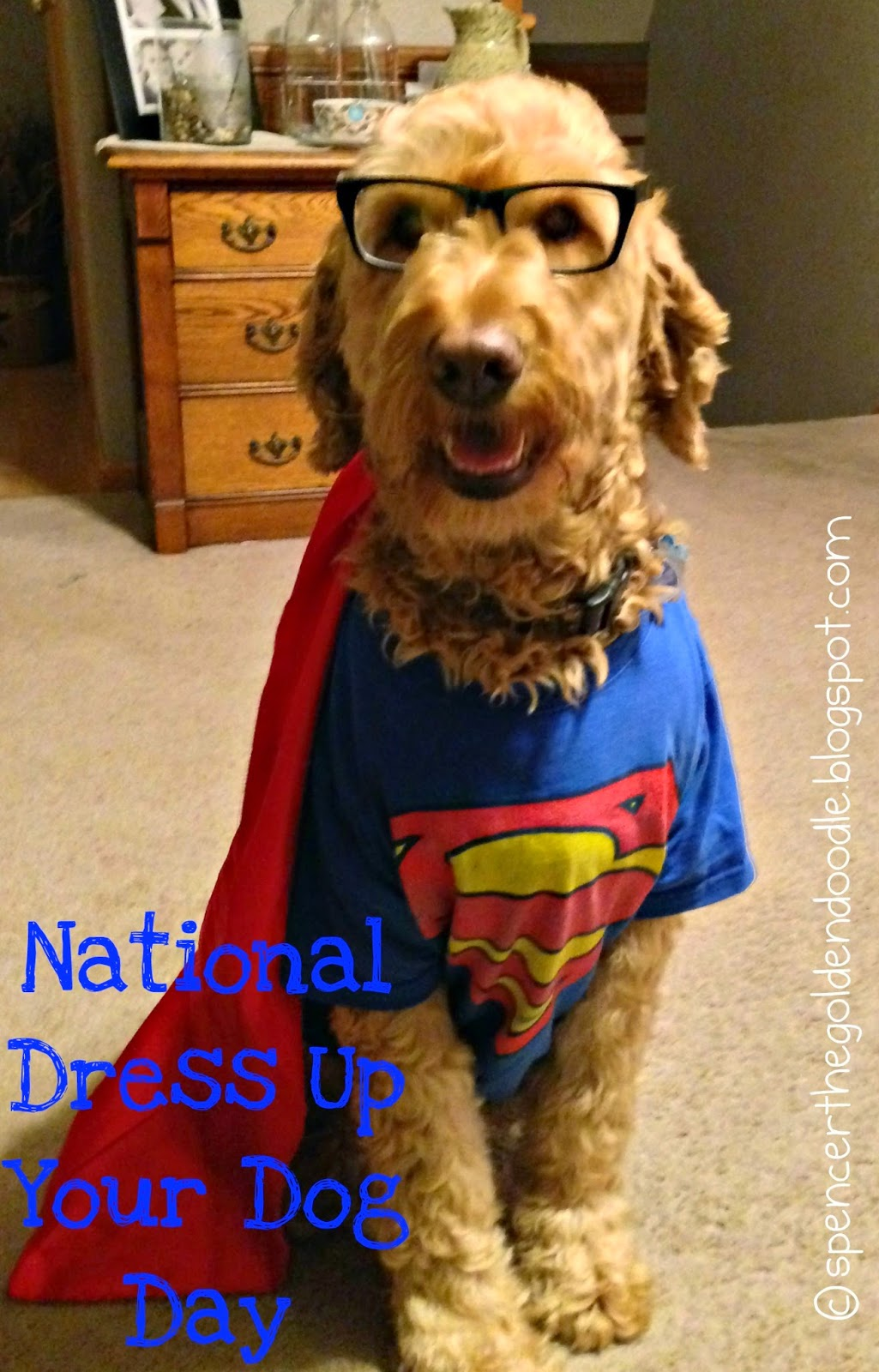 Dress up your pet day - Ww National Dress Up Your Pet Day