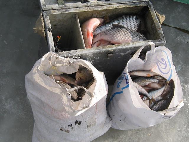 Зимние ящики для рыбалки своими руками фото
