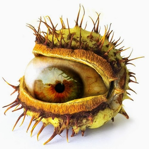 07-Conker-Eye-Jan-Oliehoek-Animal-Mashup-&-Photo-Manipulations