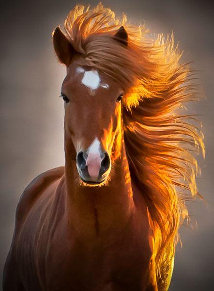 Fotos de caballos hermosos para facebook 26