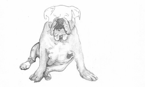 Drawing of a Bulldog