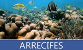Imágenes y fotografías de arecifes, corales y plancton en el fondo del océano