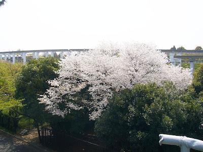 万博公園・桜