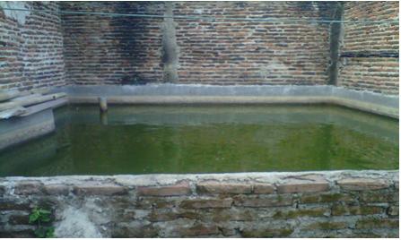 Kolam Semen Untuk Berternak Ikan Lele