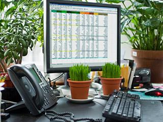 Vital e saud vel feng shui plantas de interior for Plantas para dormitorio feng shui