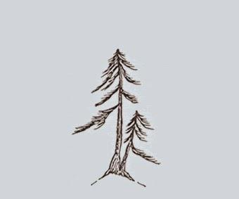 http://evoluzionebonsai.blogspot.it/2015/02/stili-bonsai-sokan-doppio-troncopadre-o.html