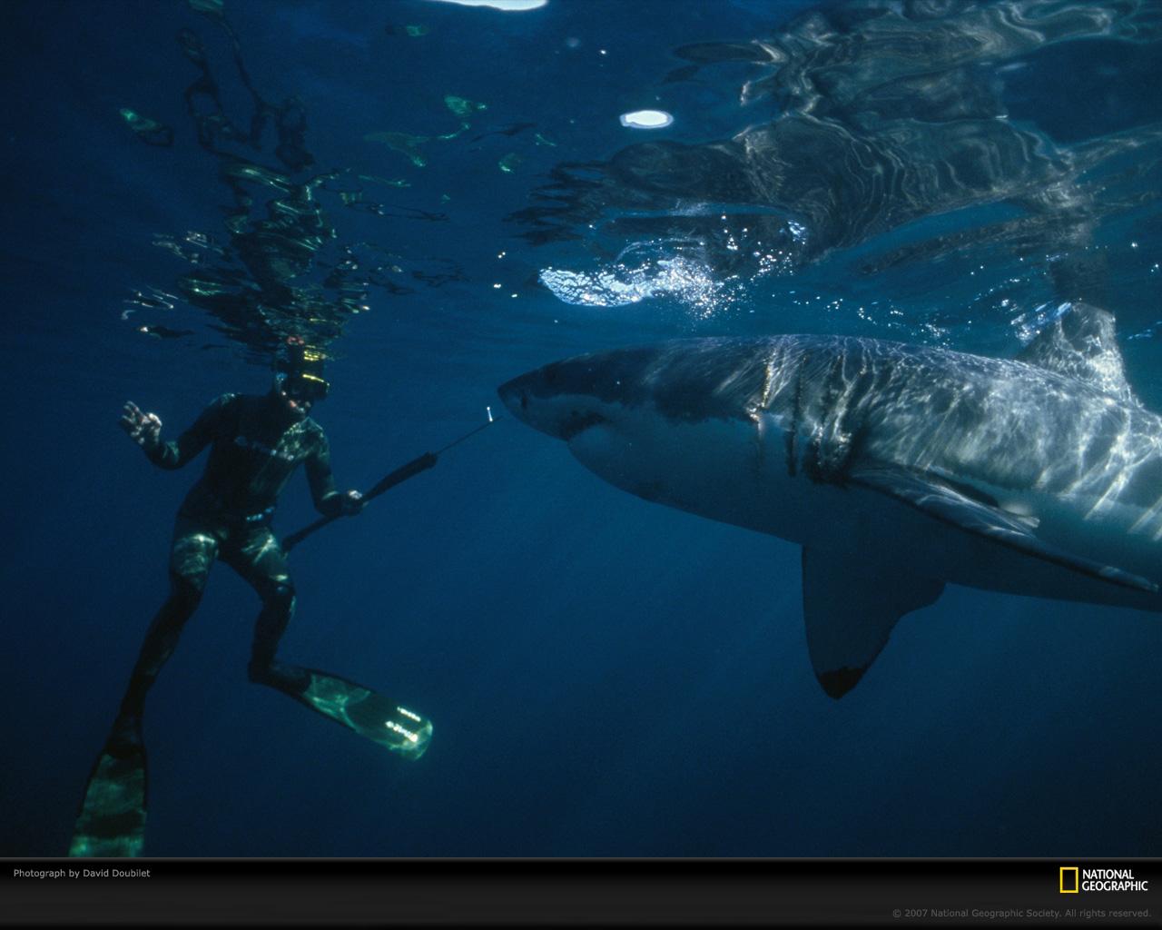 http://4.bp.blogspot.com/-Mqaz3XZFUrY/T14YLrMw4vI/AAAAAAAAAO0/QobTAtVKFiA/s1600/stupendous-shark.jpg