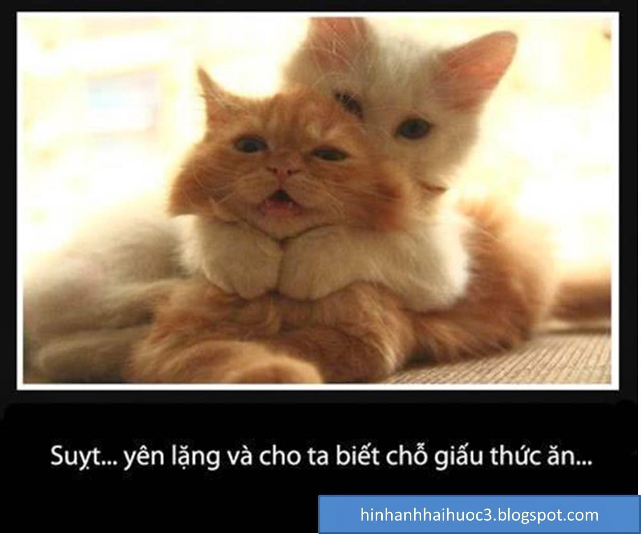 Hình ảnh chế vui về mèo