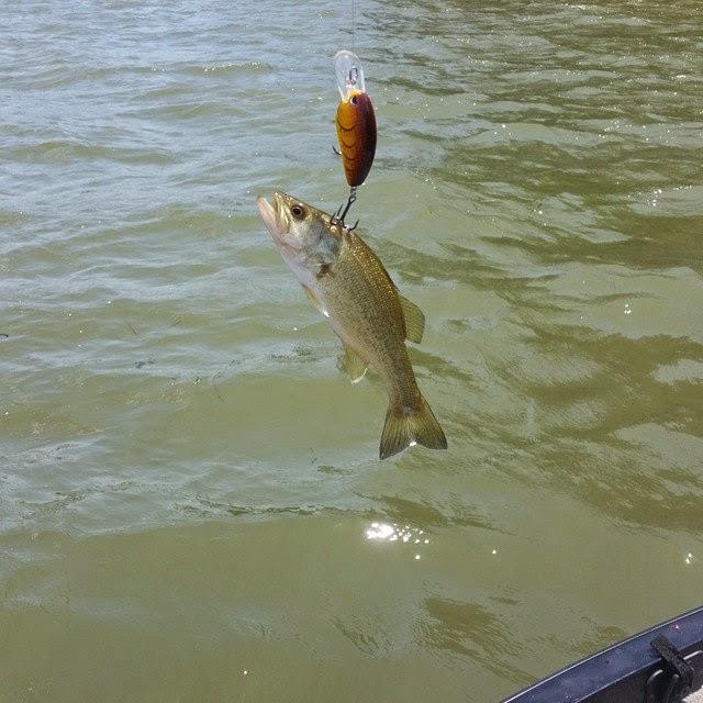 Best5zach outdoors fishing report for guntersville 5 2 15 for Wheeler lake fishing report