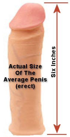 Average Size Of A Penis 94