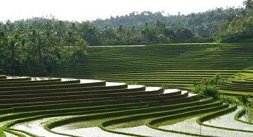 Pupuan Rice terrace
