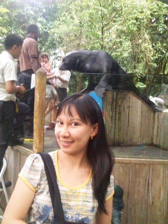 Singapore Zoo Splash Safari Sea Lion