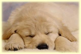 psicologia-animal-depresion-en-perros-canes-cachorros-tips-veterinario-online-consultas