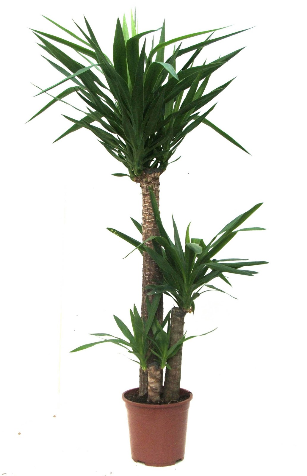 Bamboo lamp photo bamboo house plant - House plants names and pictures ...