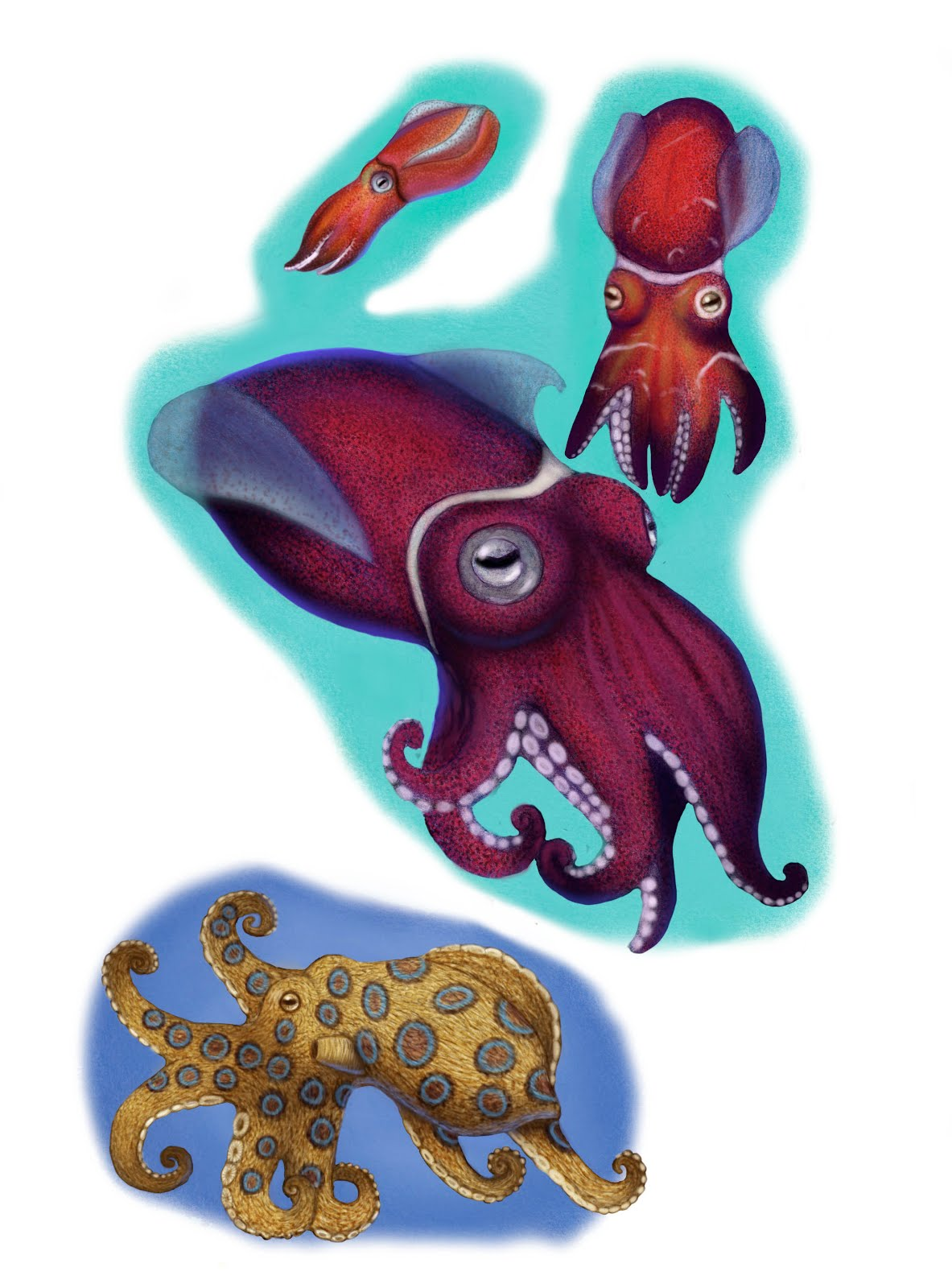 Sea Life Paintings